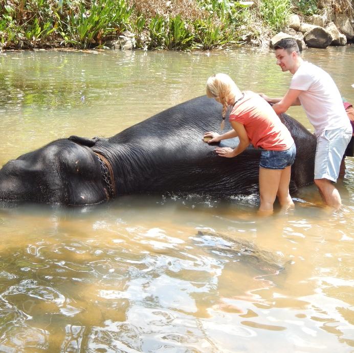 Mytí slona v Millennium Elephant