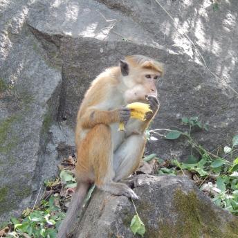 Opička s naším banánem