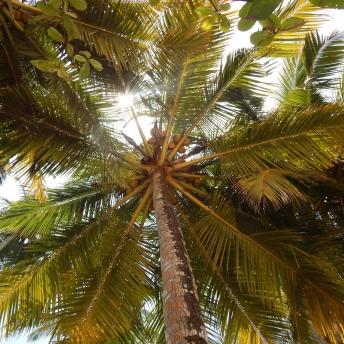 Palmy a zase palmy