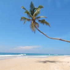 Opuštěná pláž nedaleko Mirissy