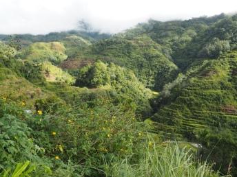 Rýžové terasy v Banaue